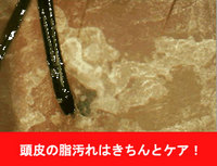 touhi0001.jpg